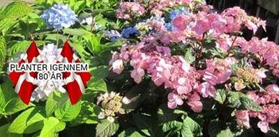 rosenhaven 5400 bogense