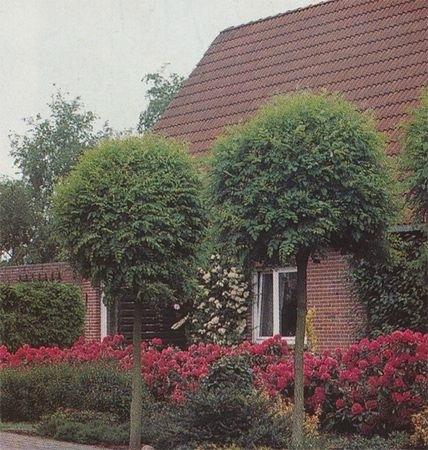 Salg af træer og planter i Søndersø